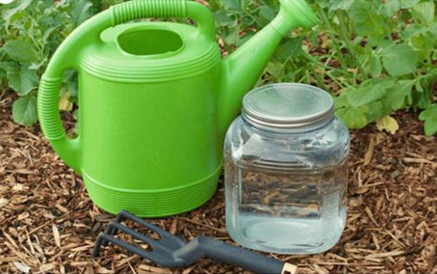 Bicarbonate de soude dans le jardin 17 utilisations