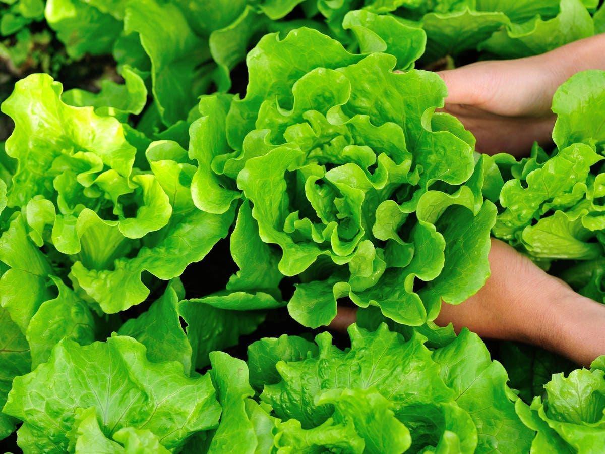 13 légumes que vous pouvez cultiver en pot