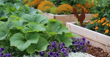 Pourquoi les jardiniers devraient toujours planter des fleurs à côté des légumes