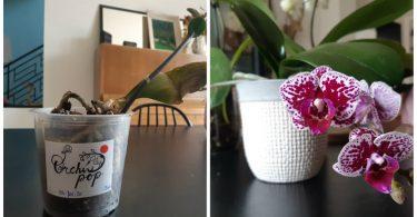 3 conseils simples et efficaces pour faire revivre vos orchidées