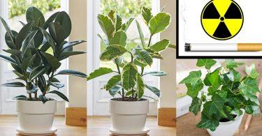 Ces 5 plantes dans votre maison protègent des radiations, des produits chimiques et de la fumée de cigarette !