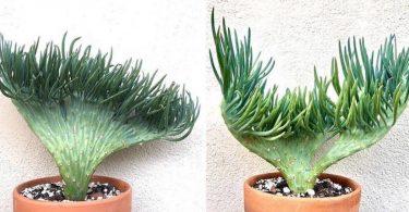 Ces plantes en forme de queues de sirènes ramènent l'océan tout droit dans votre maison