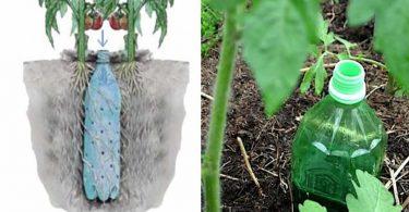 Comment Fabriquer un Arrosage Automatique Pour Tomates Avec une Bouteille
