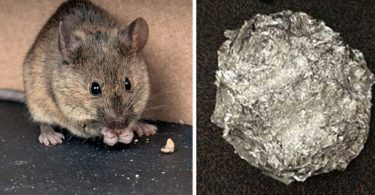 La bonne astuce au bicarbonate de soude pour empêcher les souris et les rats d'entrer dans votre maison