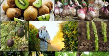 Les 10 Fruits et Légumes Les PLUS Contaminés Par les PESTICIDES