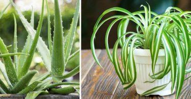 Les meilleures plantes pour purifier et décorer votre maison