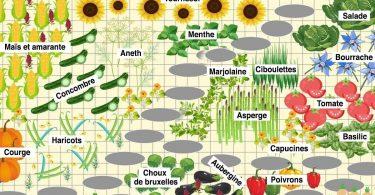 Pas de tomates à côté de vos concombres : Les secrets de jardinage pour une plantation et un potager plus productifs