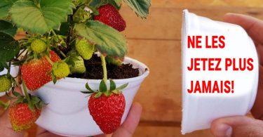 Voici comment cultiver des fraises à la maison (étape par étape)