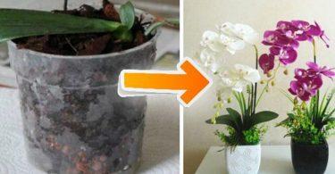 10 conseils simples et pratiques pour faire fleurir des orchidées à la maison