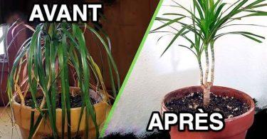 4 Secrets de Jardinier Pour Sauver une Plante MORTE (et la Faire Repartir)