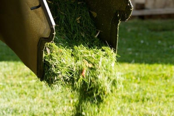 10 Engrais Naturels et Gratuits Redoutablement EFFICACES
