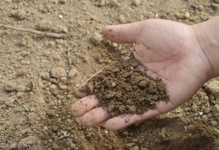 5 expériences pour connaître la nature du sol dans votre jardin
