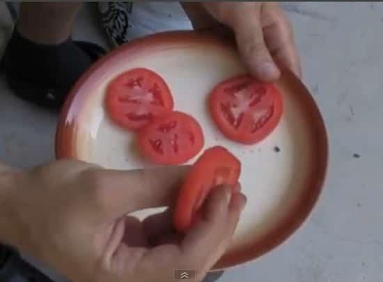 La Méthode La Plus Simple Au Monde Pour Faire Pousser des Tomates