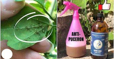 Le Spray Anti-Pucerons PUISSANT Qui Protège Vos Plantes