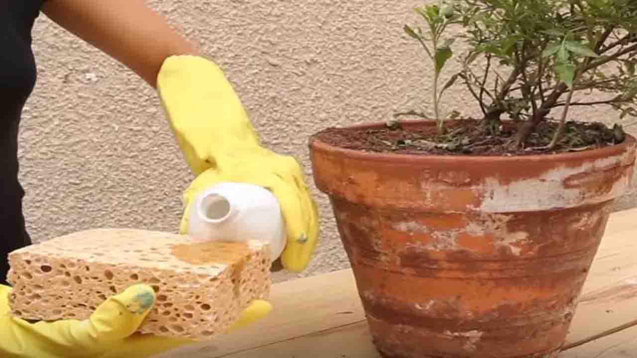 Salpêtre 3 techniques pour dire adieu aux taches blanches sur les pots