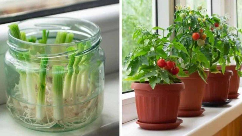 12 plantes et légumes que vous pouvez faire repousser à l'infini
