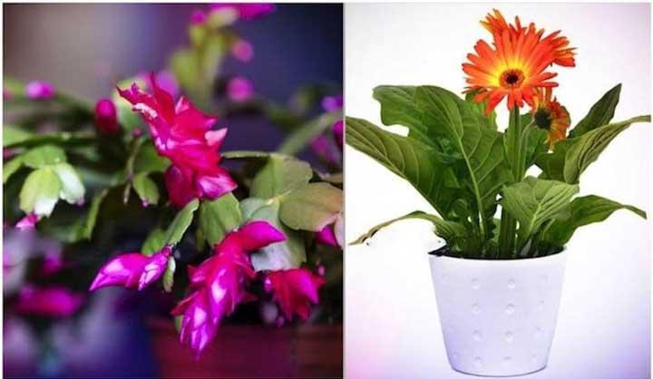 9 Plantes Qui Libèrent de l'Oxygène Même PENDANT LA NUIT