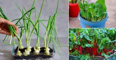 9 légumes que vous achetez une fois et faites repousser à l'infini