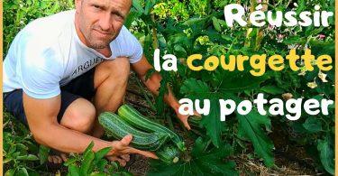 Planter les courgettes: Comment les réussir