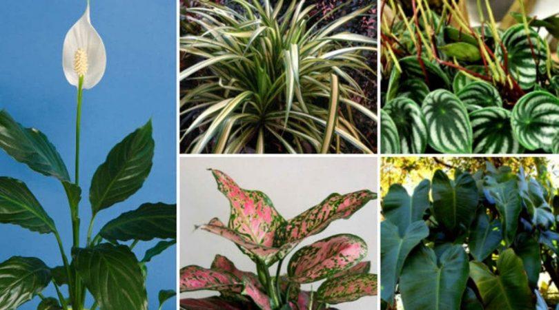 10 plantes d'intérieur qui n'ont pas besoin de soleil pour pousser
