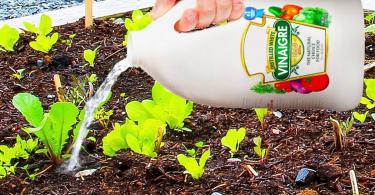 10 raisons d'utiliser le vinaigre dans votre jardin