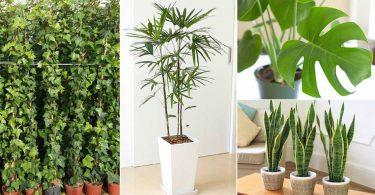 6 plantes qui sont de véritables bombes à oxygène qui dépolluent l'air de la maison