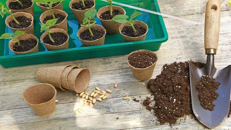 Semer les courgettes, choisir les variétés de courgettes