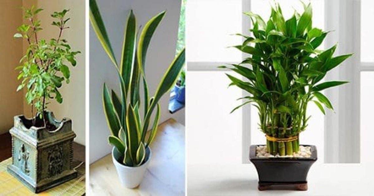 11 plantes qui attirent le bonheur, l'énergie positive et la prospérité dans votre maison