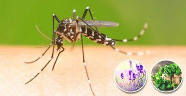 12 plantes qui font fuir les insectes