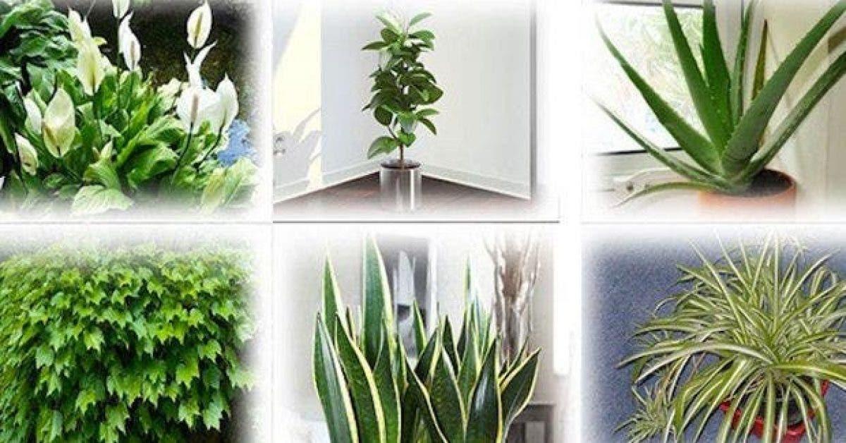 6 plantes qui purifient naturellement l'air de votre maison !