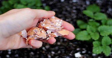 Voici ce qui arrive lorsque vous jetez les coquilles d'œufs dans votre jardin