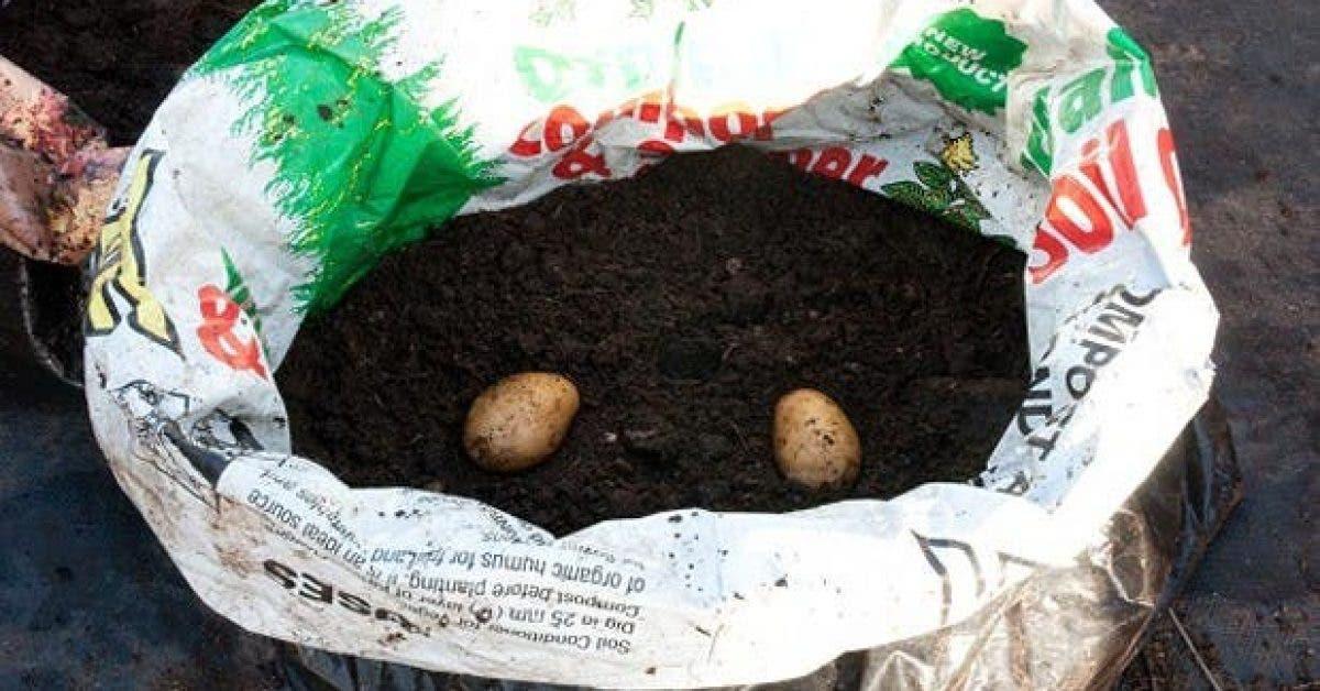 Vous n'aurez plus besoin d'acheter de pommes de terre grâce à cette astuce
