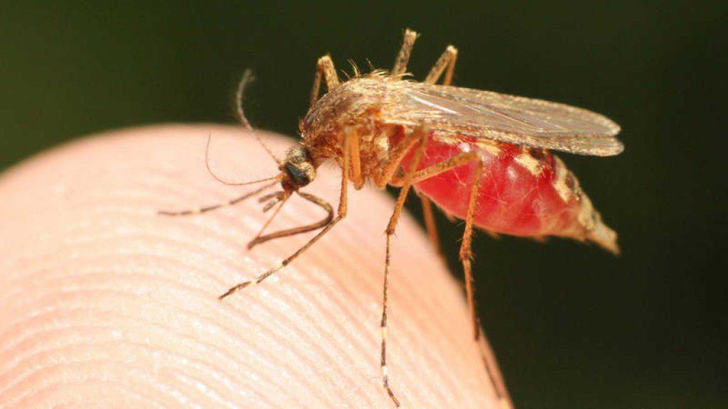 Voici pourquoi les moustiques sont attirés par des personnes plus que d'autres