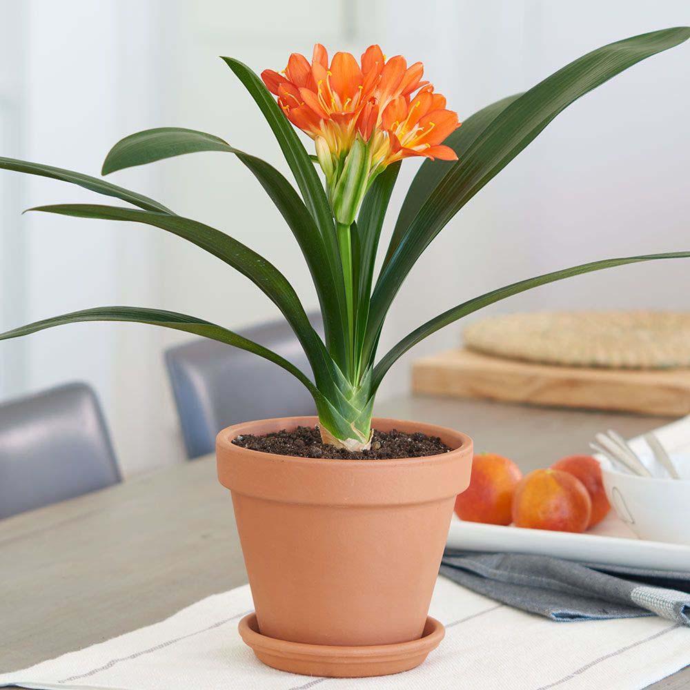 12 Plantes d'intérieur peu exigeantes qui rendent ta maison plus chaleureuse