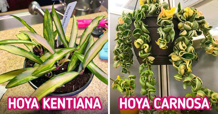6 Plantes d'intérieur qui peuvent parfumer chaque pièce de ta maison