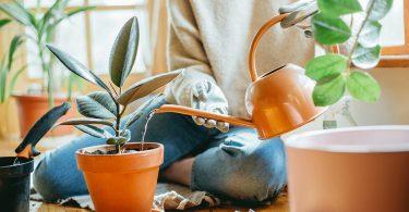 À quelle fréquence devriez-vous arroser vos plantes d'intérieur ?
