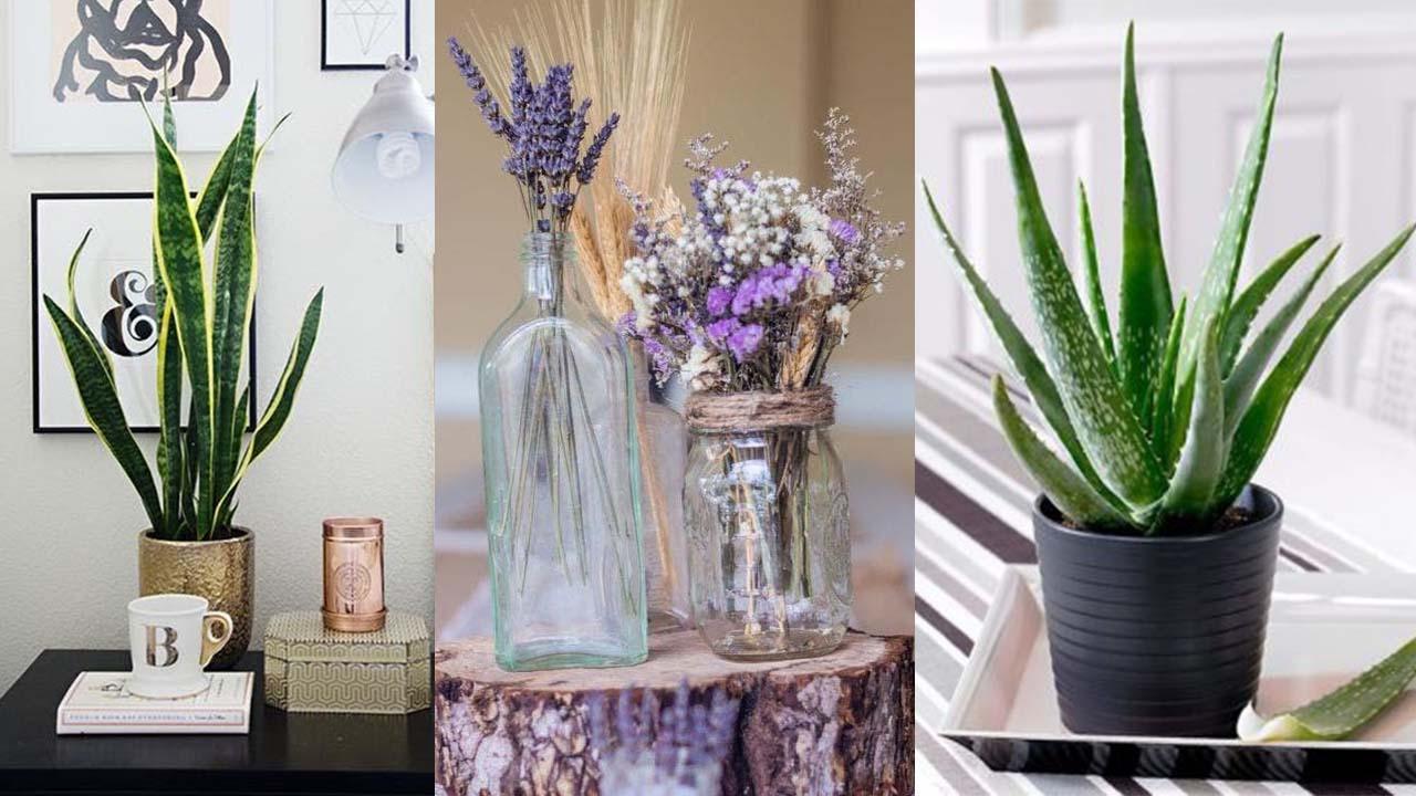 Si vous mettez l'une de ces 4 plantes dans votre chambre, vous pourrez améliorer votre sommeil