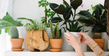 6 Idées pour mettre du vert dans les maisons sans jardin ni terrasse