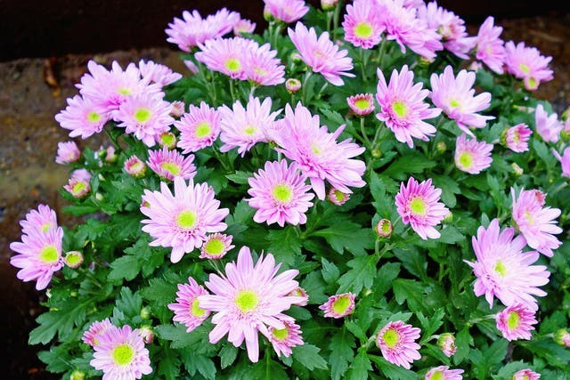 9 plantes pour attirer la chance, l'énergie positive et la prospérité dans votre maison