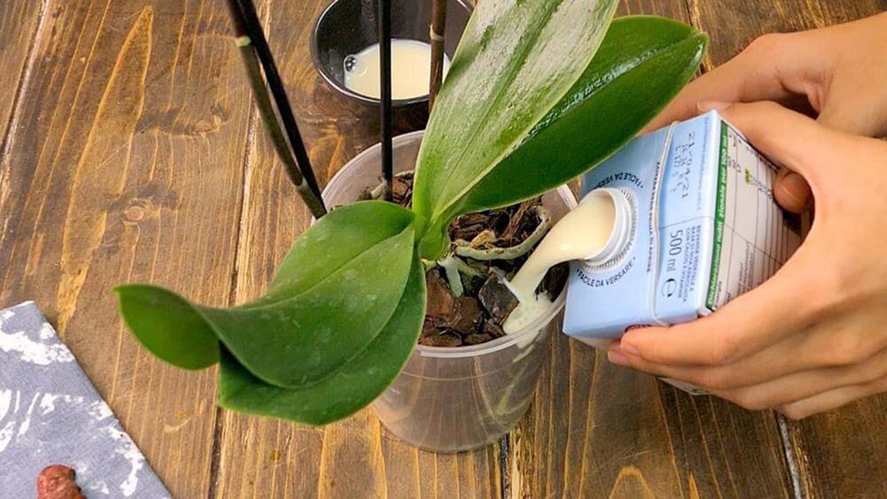 Jardinage : 5 étapes certaines pour prendre soin d'une orchidée