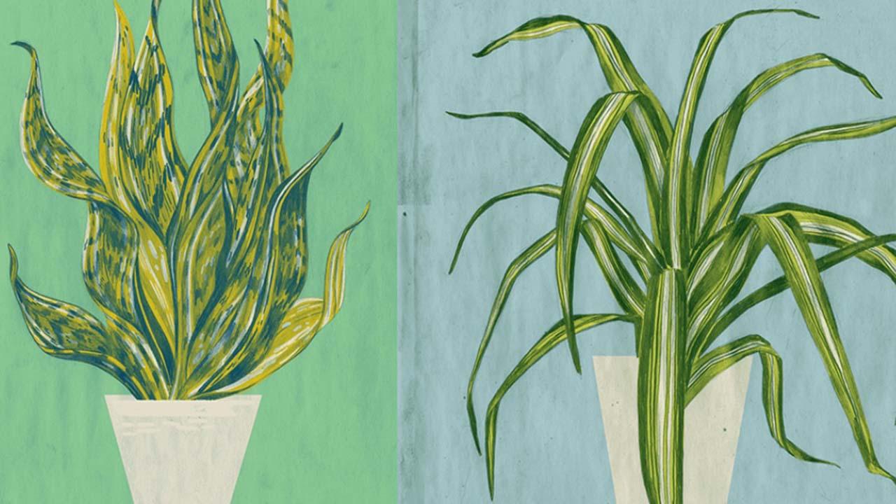 Top 5 des plantes qui améliorent la qualité de l'air de votre maison